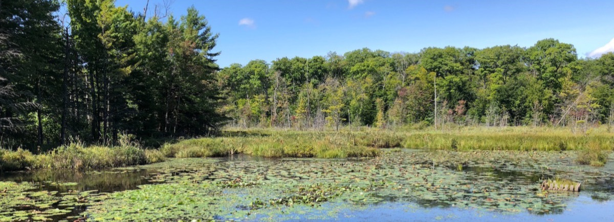 Photo of - Walking for Wilderness on Rose Island